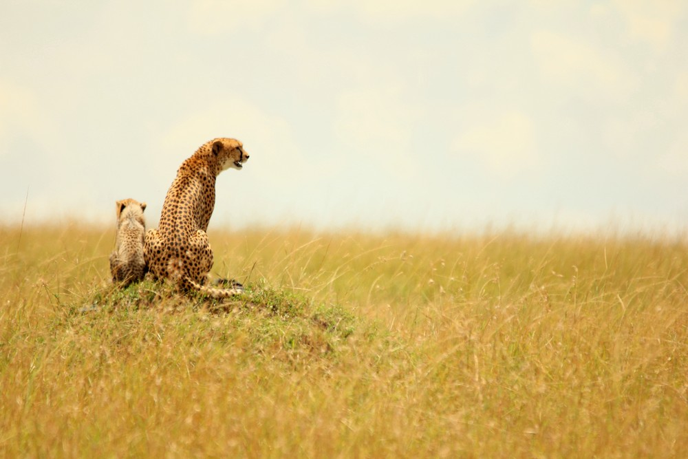 1-12-masaai-mara-kenya